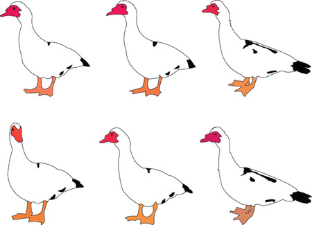 drake:  duck collection - vector Illustration