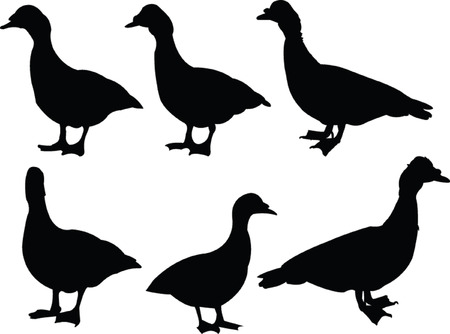 duck collection 2 - vector Vector