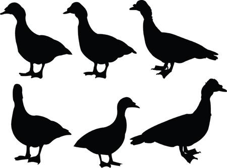 duck collection 2 - vector Vector