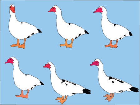 ducks collection with background - vector Vector