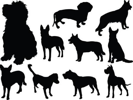 perro colección 2 - vector