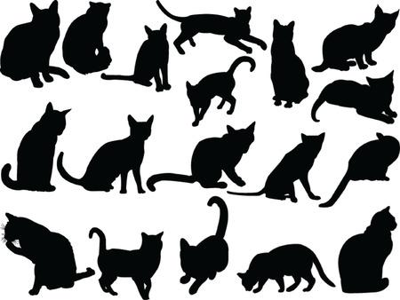 cat illustration:  cat collection - vector Illustration