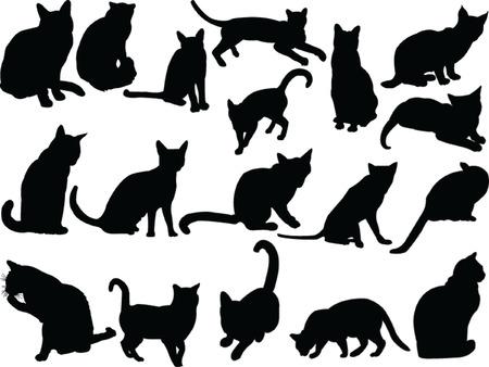 silueta de gato:  colección de Cat - vector