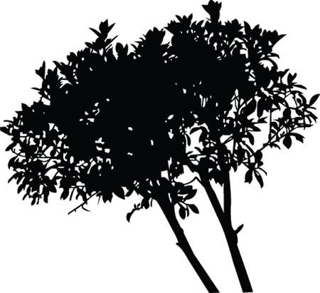 tree - vector Stock Vector - 6128513
