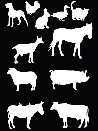 domestics animal 2  Stock Vector - 8009437