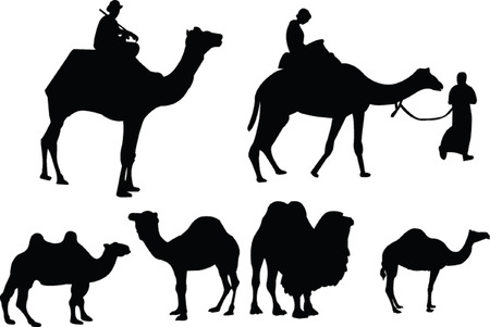 saddle camel: camels collection - vector