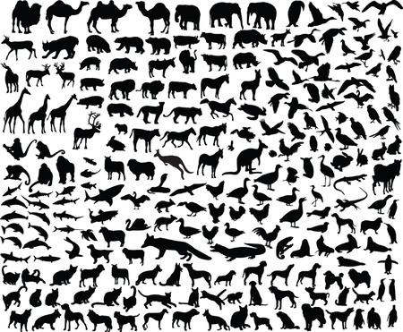 big collection of different animal - vector