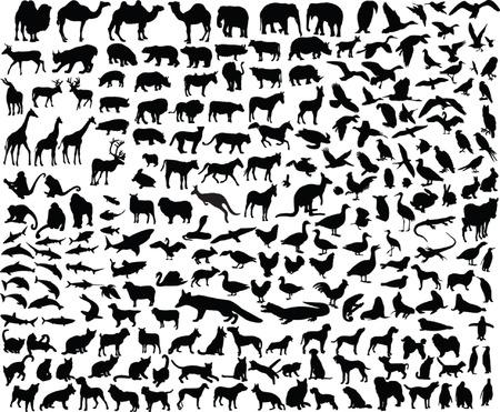 siluetas de animales: gran colecci�n de diferentes animales - vector
