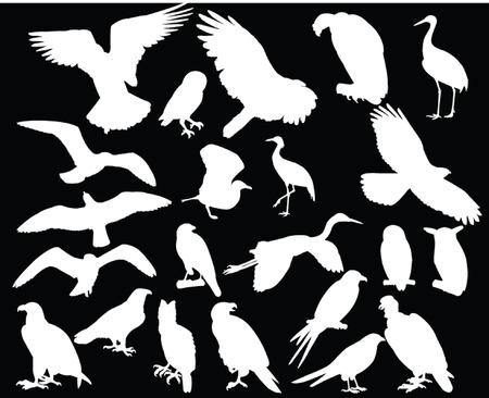condor: bird collection - vector