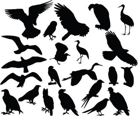 pigeon owl: bird collection - vector