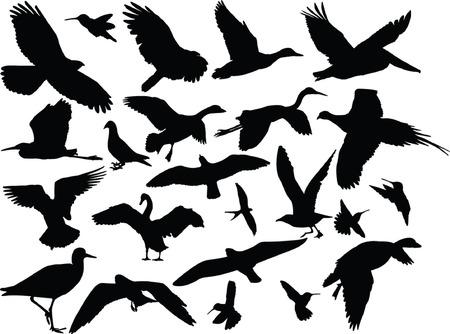 別の鳥のコレクション - ベクトル  イラスト・ベクター素材