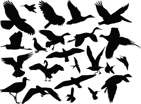 verschillende vogels collectie - vector