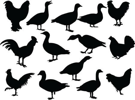 duck feet: farm birds - vector