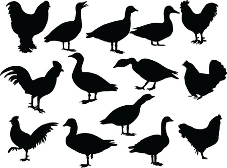 farm birds - vector