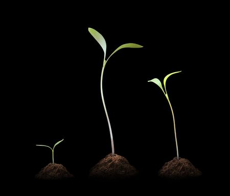 3 Young plant Stock Photo - 7601670