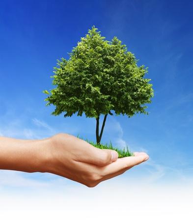planta a mano, árbol