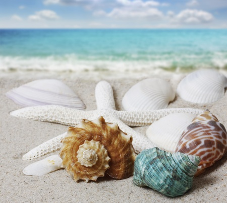 shell fish: sea shells with sand background