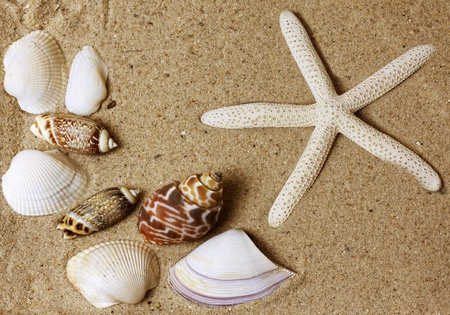 warm water fish: sea shells with sand background