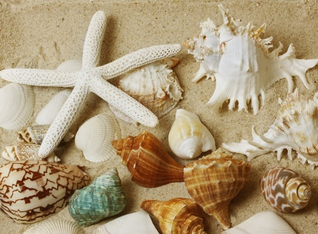 sea shells with sand background  photo