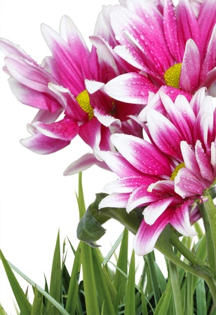 Beautiful flowers  Stock Photo - 9724872
