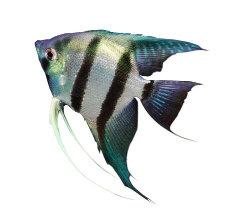 exotic pet: fish
