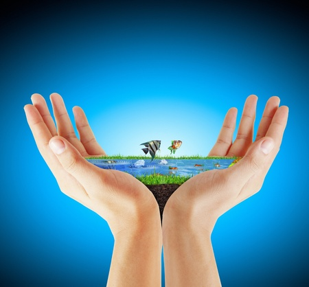 ahorrar agua: Pescado y agua en la mano