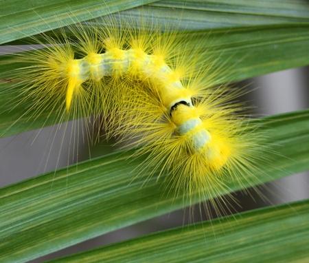 caterpillar  Stock Photo - 9859441