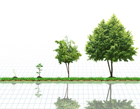 advancement: The growth of the plant, tree