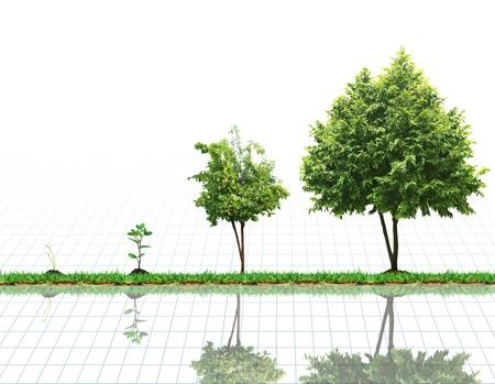 El crecimiento de la planta, árbol