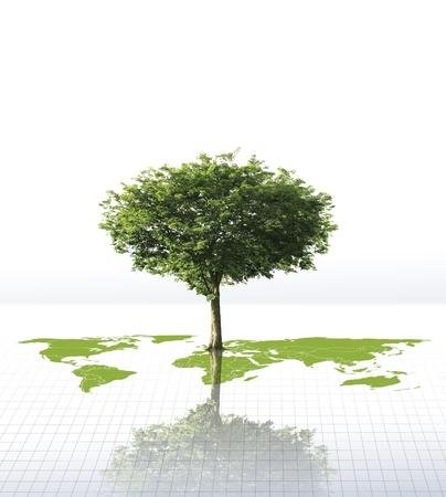 broad leaf: tree