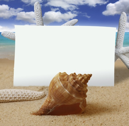 shell pattern: shells with sand and paper