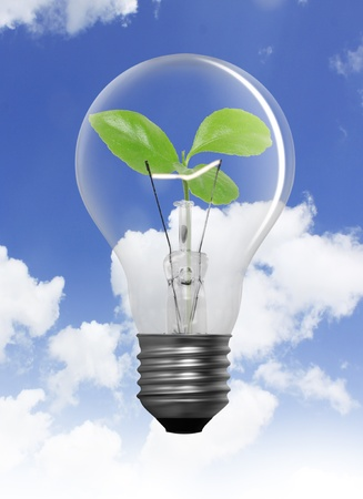 natural resource: Tree in a light bulb