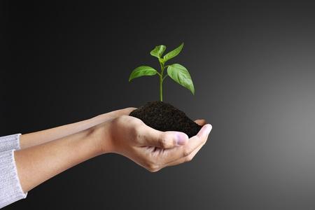 arbol de la vida: planta de mano