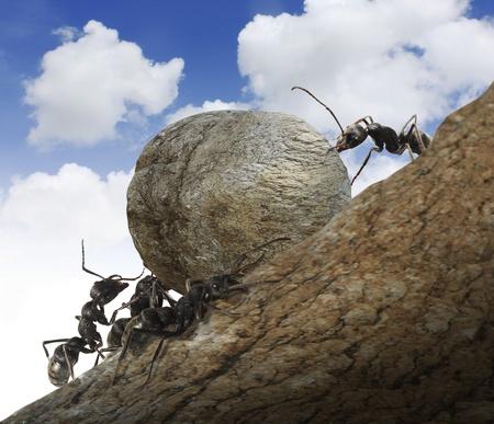 Ant Stock Photo - 10590246