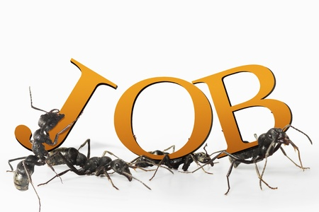 Ant job and employment concept work in progress at wor