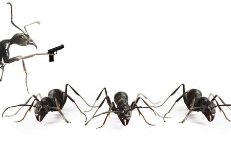 ants Stock fotó