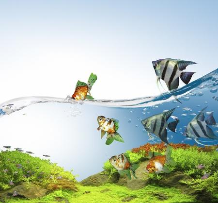 angelfish: Freshwater fish in the lake