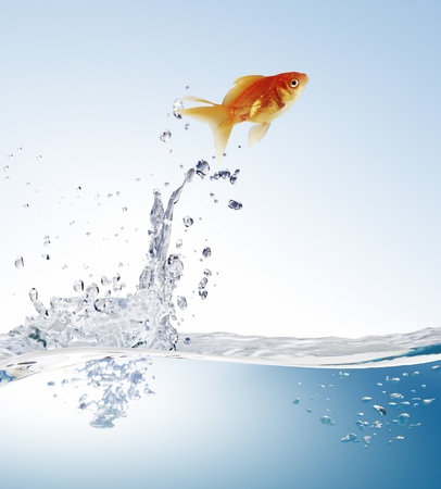 pez dorado: pez de colores saltando