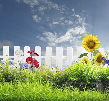 White fence and green grass  Stock Photo
