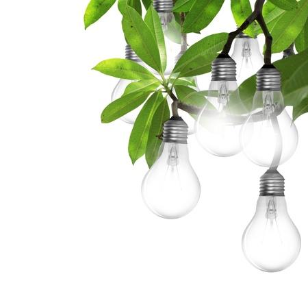 save electricity: Lightbulb