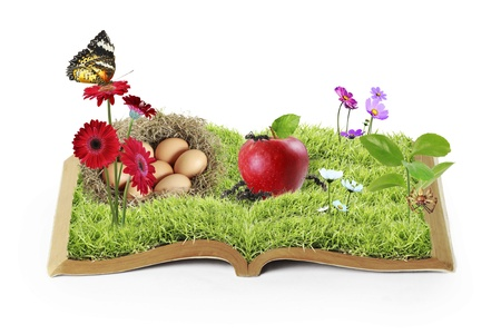 flowers on the grass, growing from a book  photo
