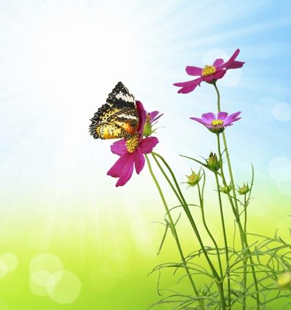mariposas amarillas: Flores Foto de archivo