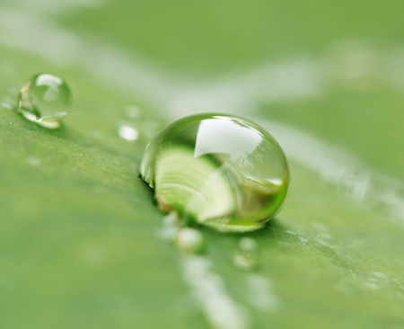 refreshed: water drop green background Stock Photo