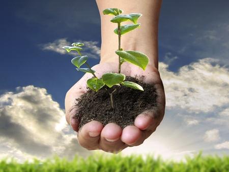hands holding tree: hand plant  Stock Photo