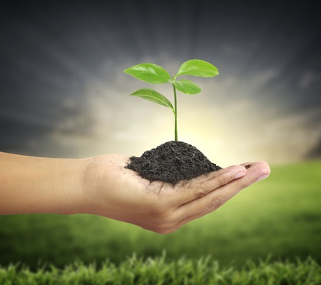 prosperous: plant in hand  Stock Photo