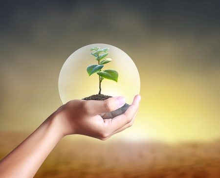 hands holding tree: Green plant in a hand Stock Photo