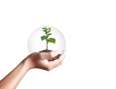 green plant in a hand Stock Photo - 13377054