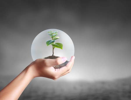 protect: green plant in a hand Stock Photo
