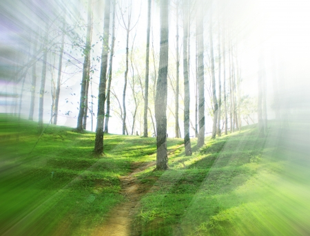 trailway: nature green wood sunlight backgrounds