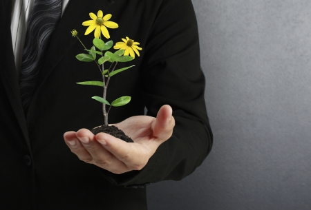 green plant in a hand Stock Photo - 17186678
